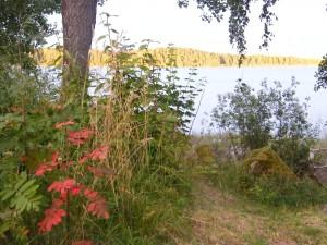Sensommar vid Bysjön
